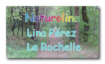 Lien site Naturolina Lina Pérez naturopathe la Rochelle